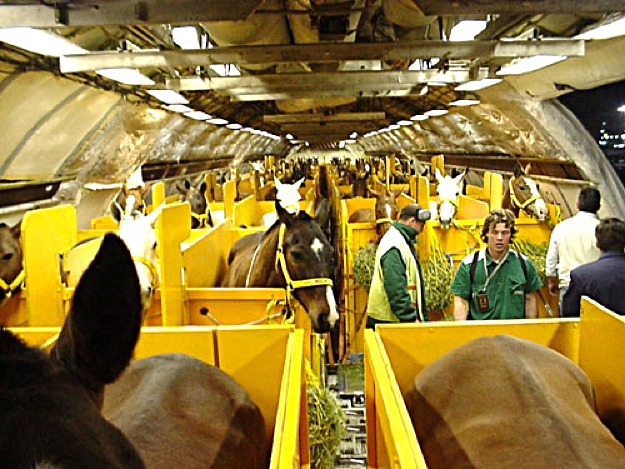 Horses on Plane