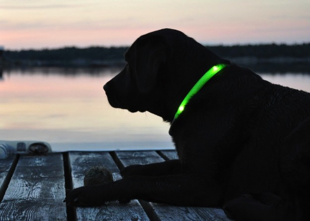 Glowing Dog Collars