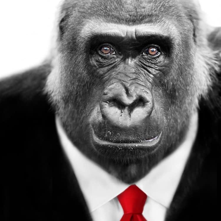 01-gorilla