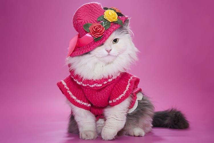 09-cat