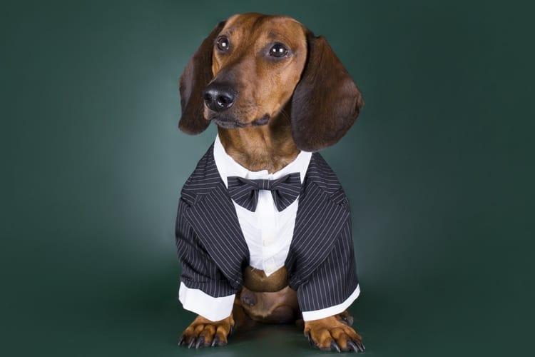 16-dog