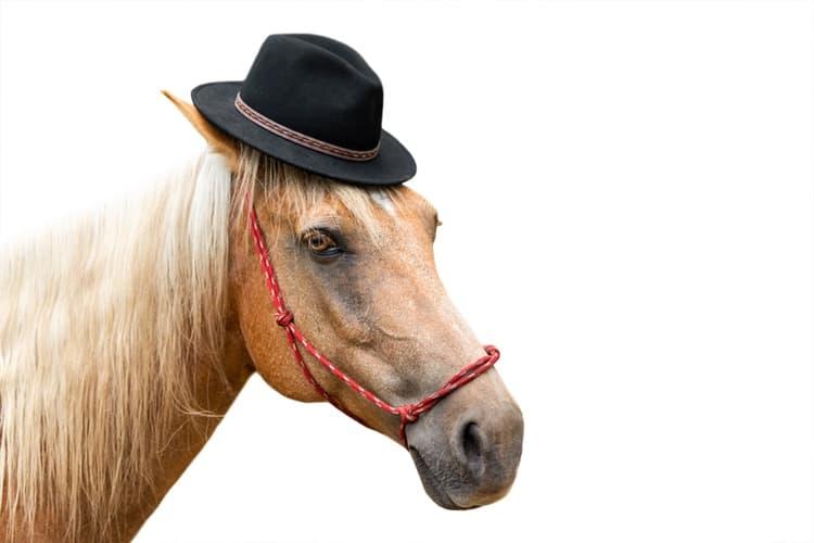 18-horse