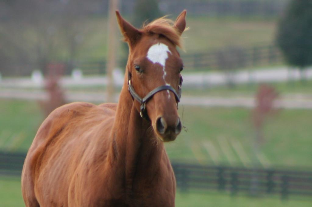 raising horses