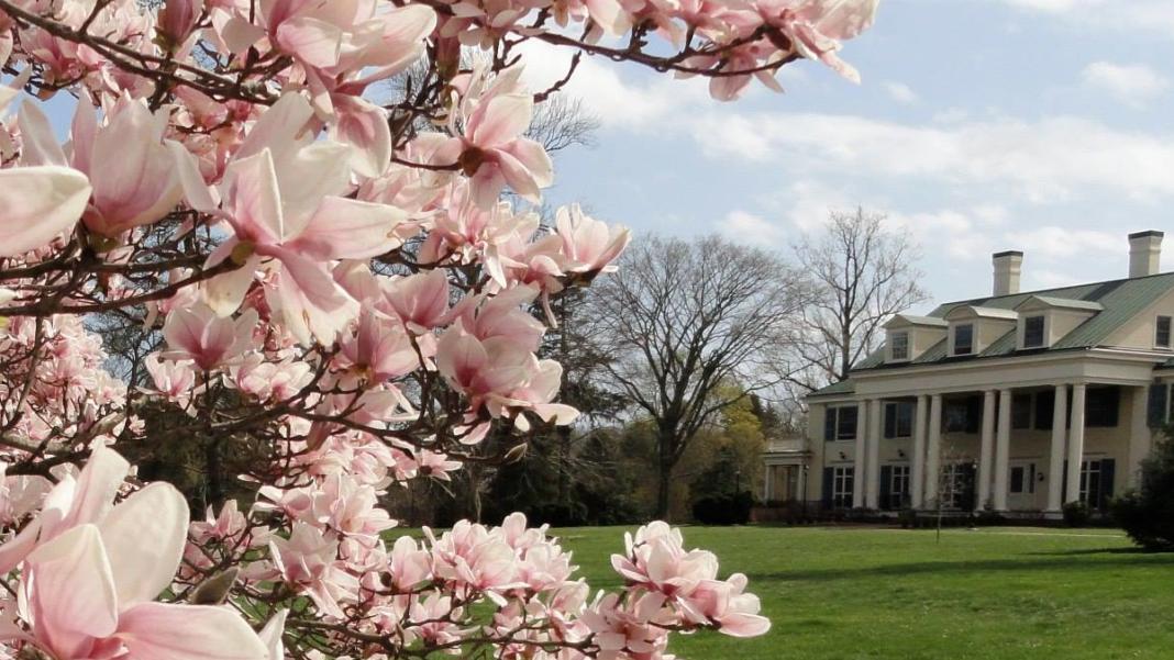 Princeton blossoms