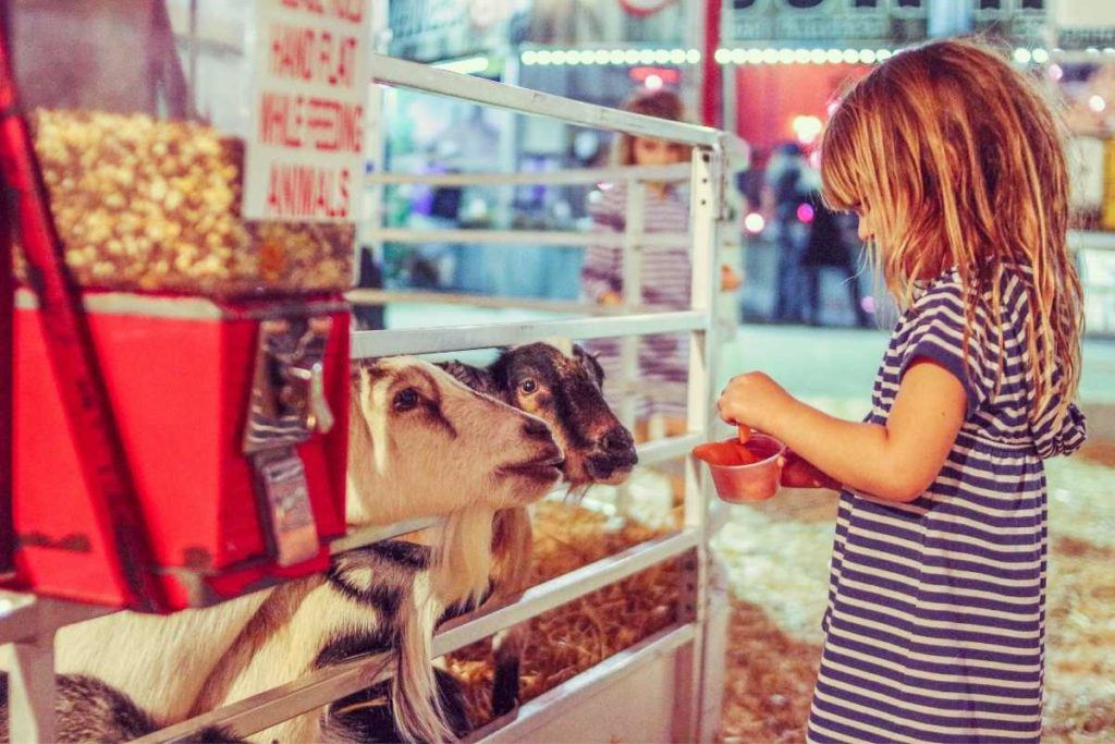 petting zoo showing it's great as a rental business idea