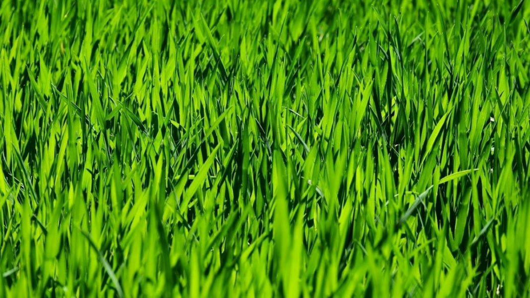 lawn care - featured image